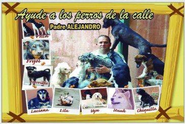 Ayude a los perros de la calle