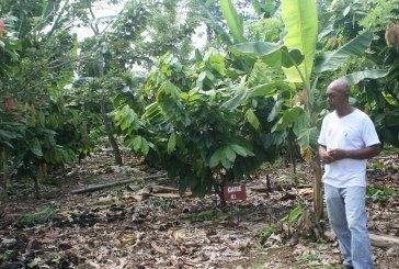 Asociación de Productores Agrícolas de Guácimo impulsa reactivación del cacao