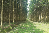 La Reforestación y el Cultivo Forestal
