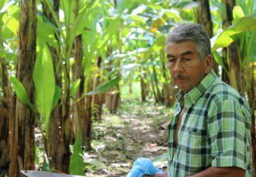 Luis Araya Quiros: Un amante de la madera