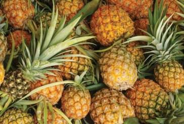 Productores exigen acciones por supuesta piña orgánica falsa