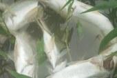 Miles de peces mueren por contaminación en río Madre de Dios