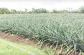 Investigación revela contaminación por agroquímicos en fuentes de agua