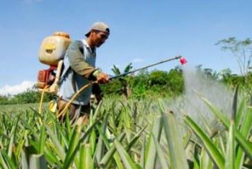Trabajadores de plantaciones buscan reivindicación de sus derechos laborales