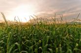 El Derecho Agrario
