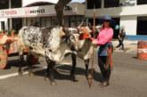 Boyerosdesfilarán por las calles de San Josédurante la XXII Entrada de Santos y Desfile de Boyeros