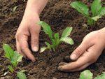 Agroservicios Multiples