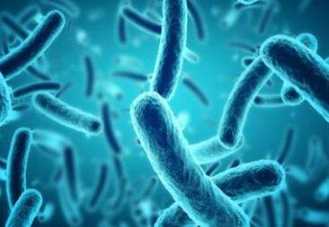 Ministerio de Salud activa protocolo ante aumento de casos de Tosferina