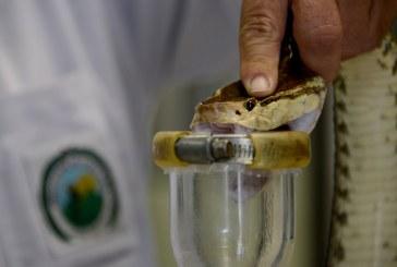 UCR lidera proyecto de importancia mundial para reducir muertes por veneno de serpientes