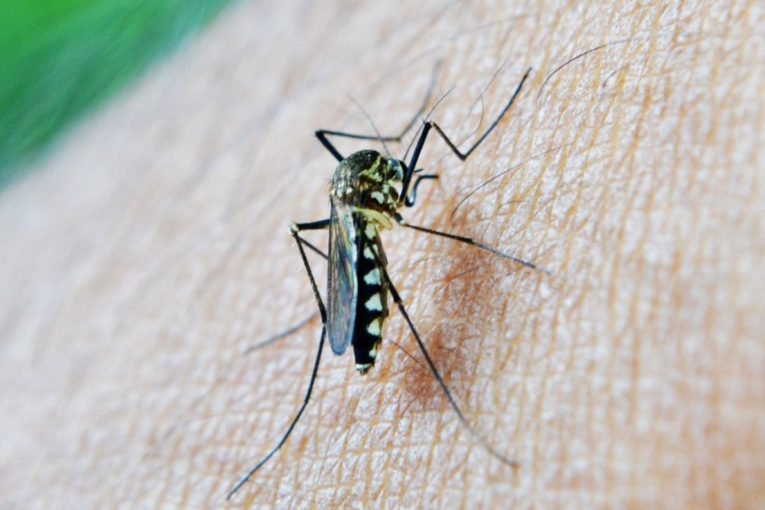 Ministerio de Salud confirmó 4 casos de malaria en Limón