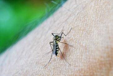Casos de dengue aumentan en un 70% respecto al 2018