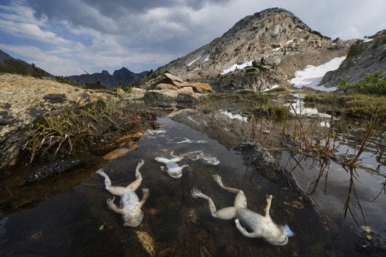 La Tierra ha entrado en su sexta extinción masiva