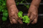 Este verano cuide sus plantas de forma responsable con el ambiente