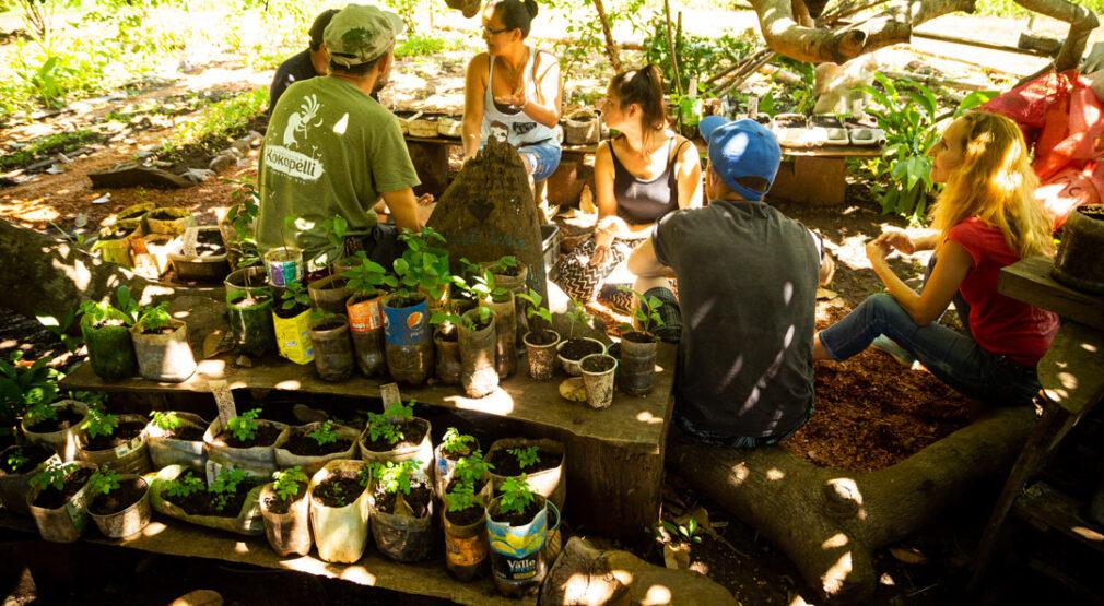 Programa de reforestación 2020: Árboles para los mares