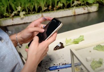 Agricultura 4.0: ¿cómo sacar adelante cultivos desde un teléfono celular?