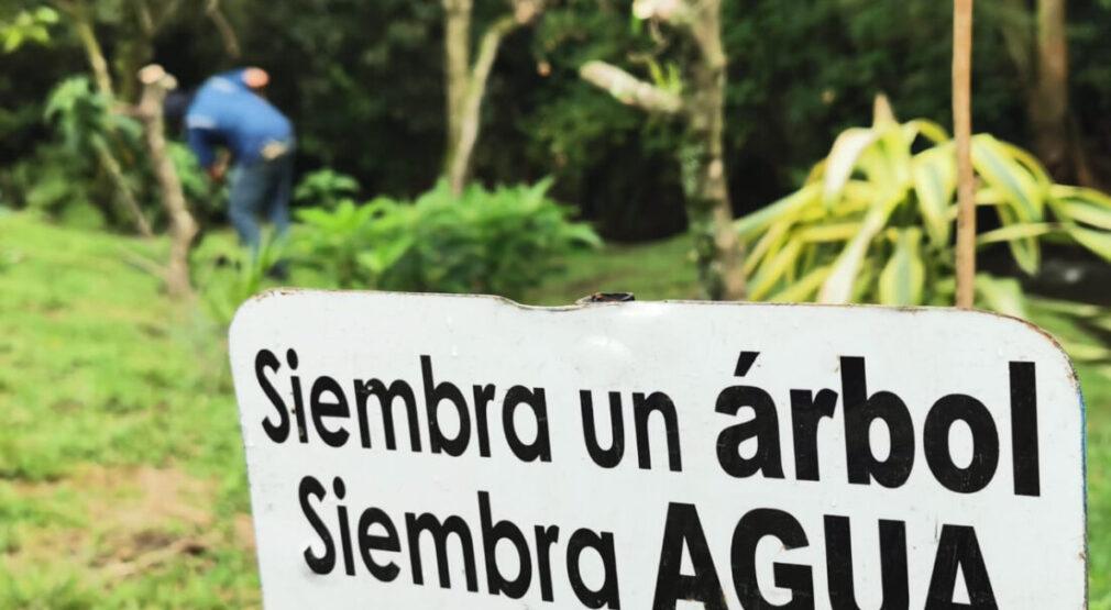 250 nuevos árboles de especies de importancia ecológica rehabilitan parte del Río Torres