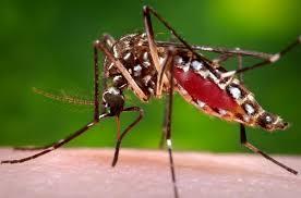 Casos de dengue en el 2020 ya superan la totalidad de casos del 2019